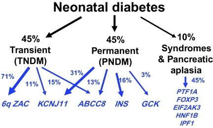 Neonatal Diabetes prognosis